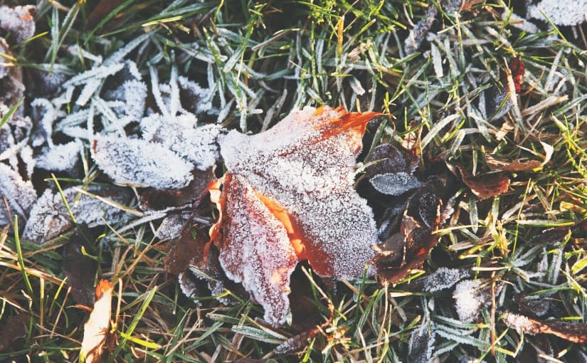 winter lawns still need water